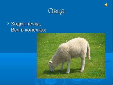 Овца Ходит печка, Вся в колечках