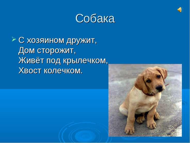 Собака С хозяином дружит, Дом сторожит, Живёт под крылечком, Хвост колечком.