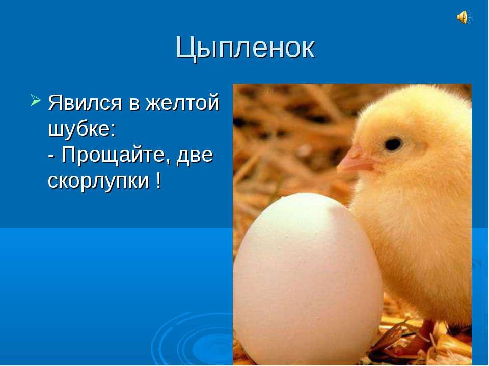 Цыпленок Явился в желтой шубке: - Прощайте, две скорлупки !