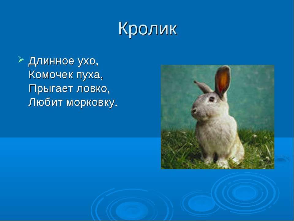 Кролик Длинное ухо, Комочек пуха, Прыгает ловко, Любит морковку.