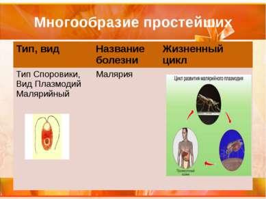 Многообразие простейших Тип, вид Название болезни Жизненный цикл Тип Споровик...