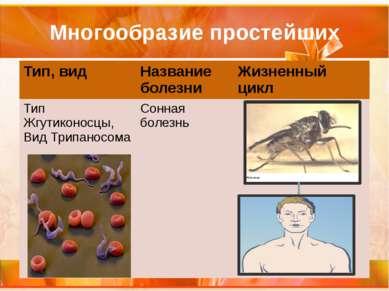 Многообразие простейших Тип, вид Название болезни Жизненный цикл Тип Жгутикон...