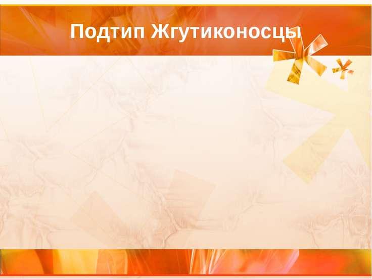 Подтип Жгутиконосцы