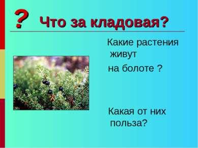 Что за кладовая? Какие растения живут на болоте ? Какая от них польза? ?