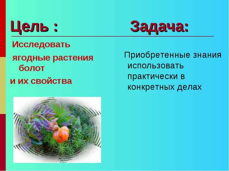 Цель : Задача: Исследовать ягодные растения болот и их свойства Приобретенные...