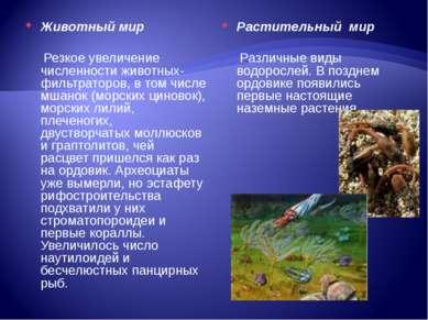 Растительный мир Различные виды водорослей. В позднем ордовике появились пер...
