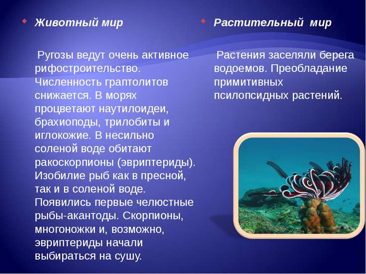 Животный мир Ругозы ведут очень активное рифостроительство. Численность грапт...