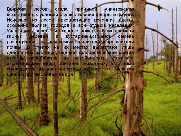Вырубка лесов стала причиной уничтожения естественных условий осуществления ф...