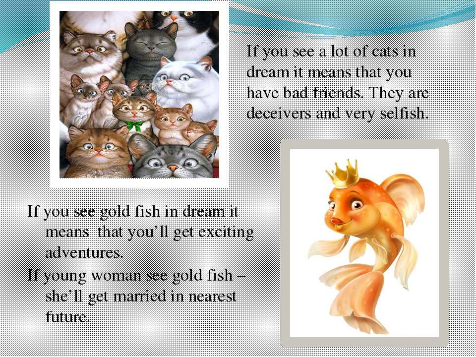 If you see a lot of cats in dream it means that you have bad friends. They ar...