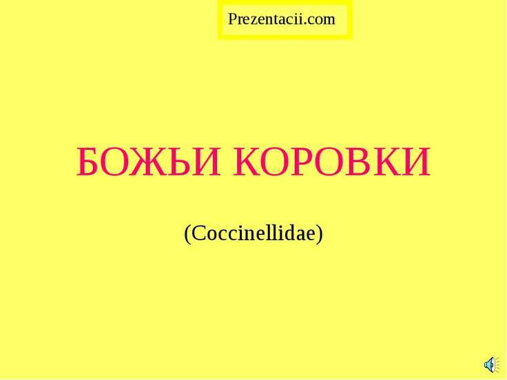БОЖЬИ КОРОВКИ (Coccinellidae) Prezentacii.com