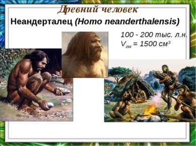 Древний человек 100 - 200 тыс. л.н. Vгм = 1500 см3 Неандерталец (Homo neander...