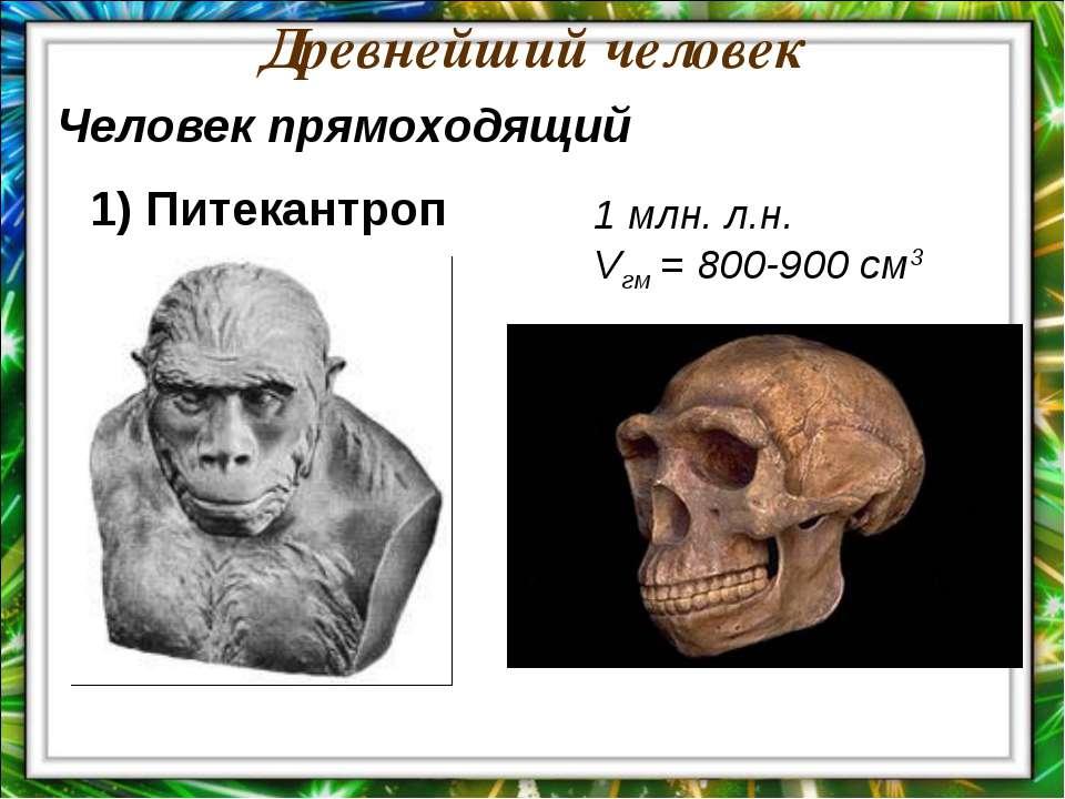 Древнейший человек 1 млн. л.н. Vгм = 800-900 см3 Человек прямоходящий 1) Пите...
