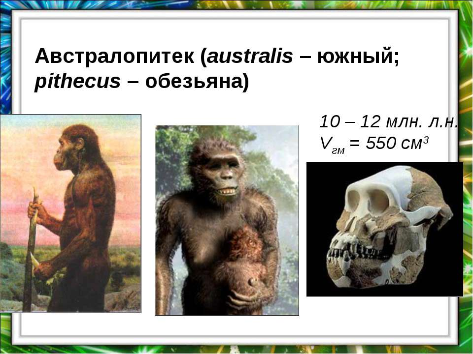 Австралопитек (australis – южный; pithecus – обезьяна) 10 – 12 млн. л.н. Vгм ...