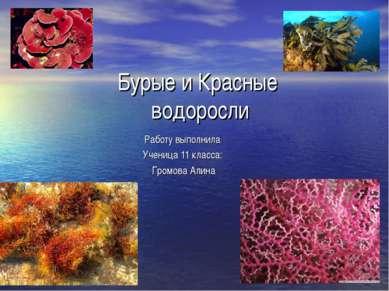 Бурые и Красные водоросли Работу выполнила Ученица 11 класса: Громова Алина