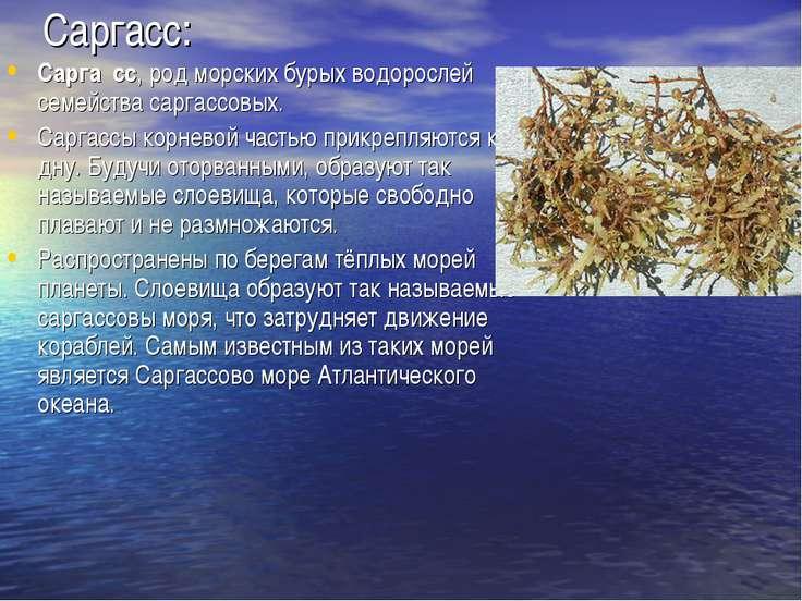 Саргасс: Сарга сс, род морских бурых водорослей семейства саргассовых. Саргас...