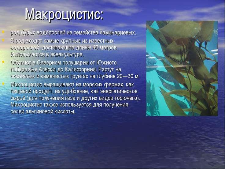 Макроцистис: род бурых водорослей из семейства ламинариевых. В род входят сам...