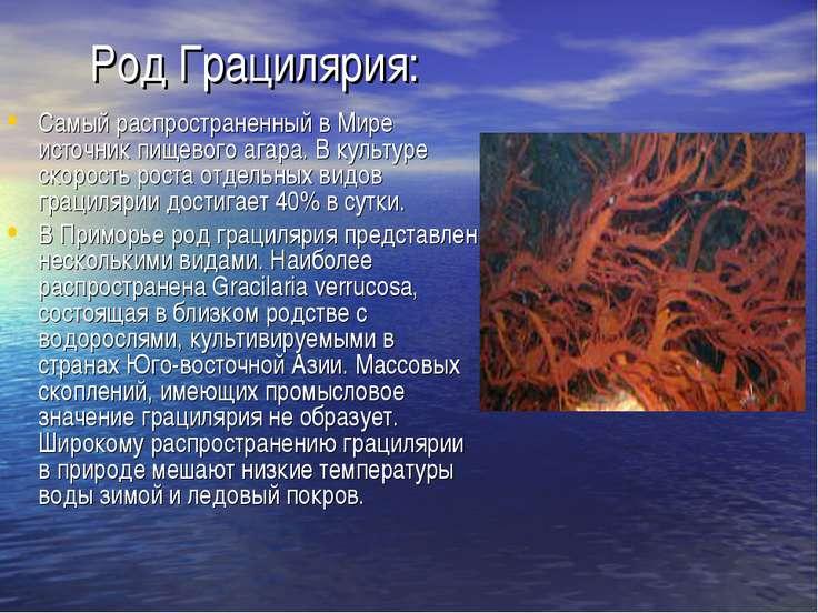 Род Грацилярия: Самый распространенный в Мире источник пищевого агара. В куль...