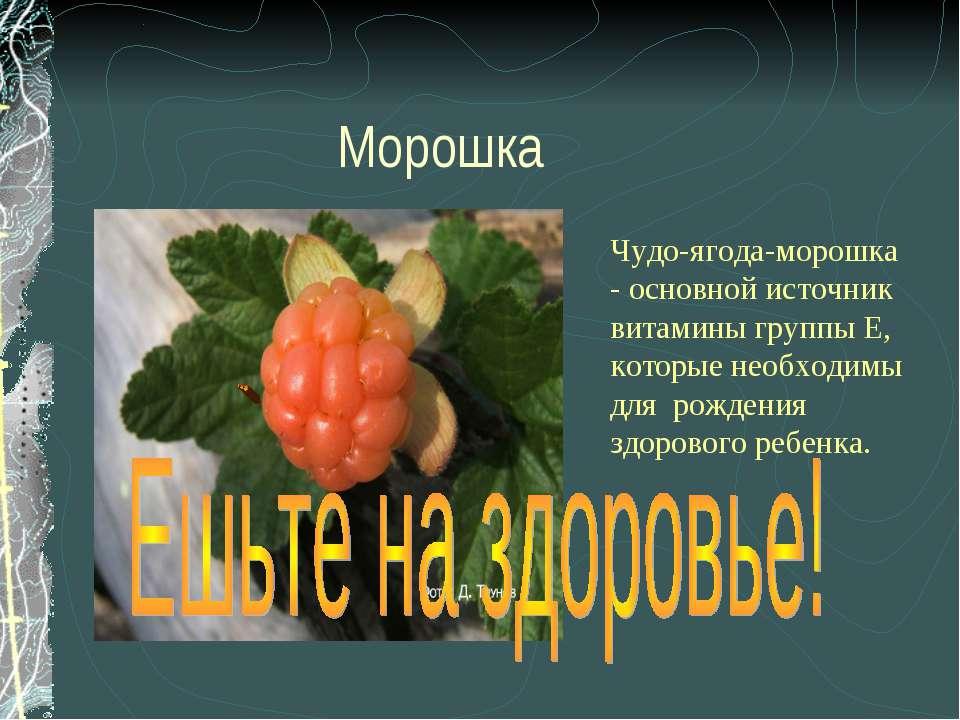 Морошка Чудо-ягода-морошка - основной источник витамины группы Е, которые нео...