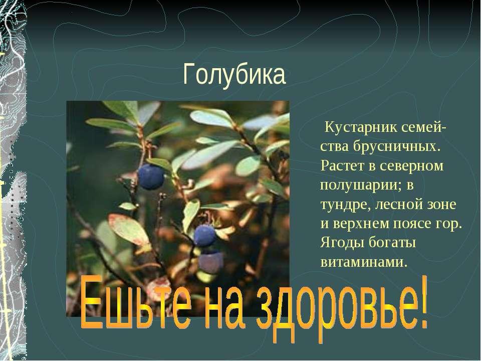 Голубика Кустарник семей- ства брусничных. Растет в северном полушарии; в тун...