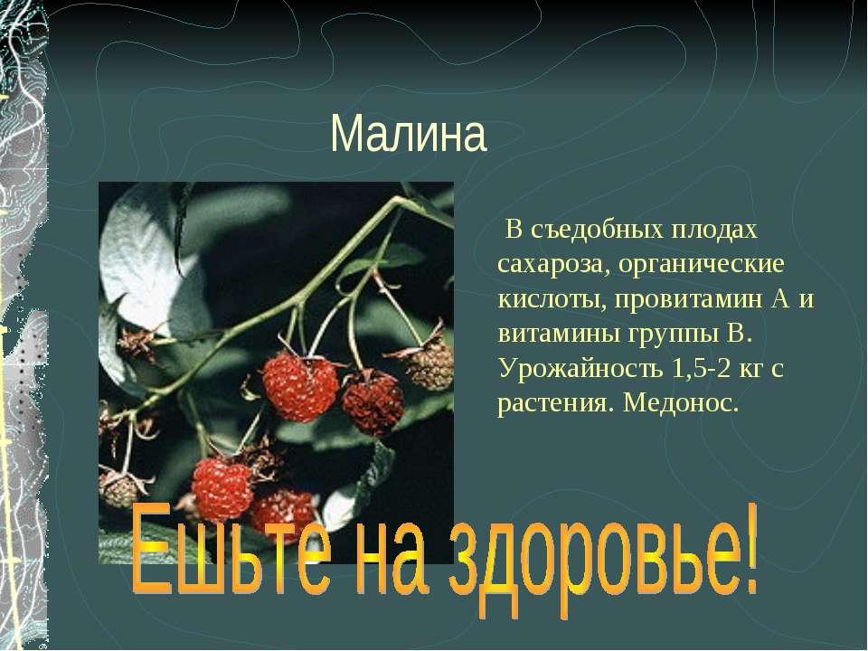 Малина В съедобных плодах сахароза, органические кислоты, провитамин А и вита...