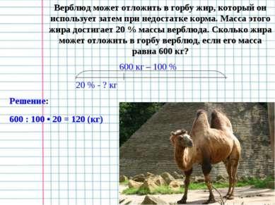 Верблюд может отложить в горбу жир, который он использует затем при недостатк...