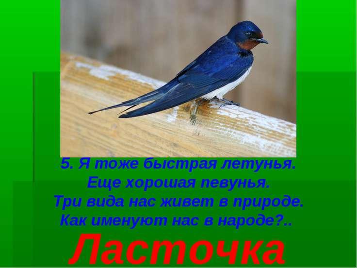 5. Я тоже быстрая летунья. Еще хорошая певунья. Три вида нас живет в природе....