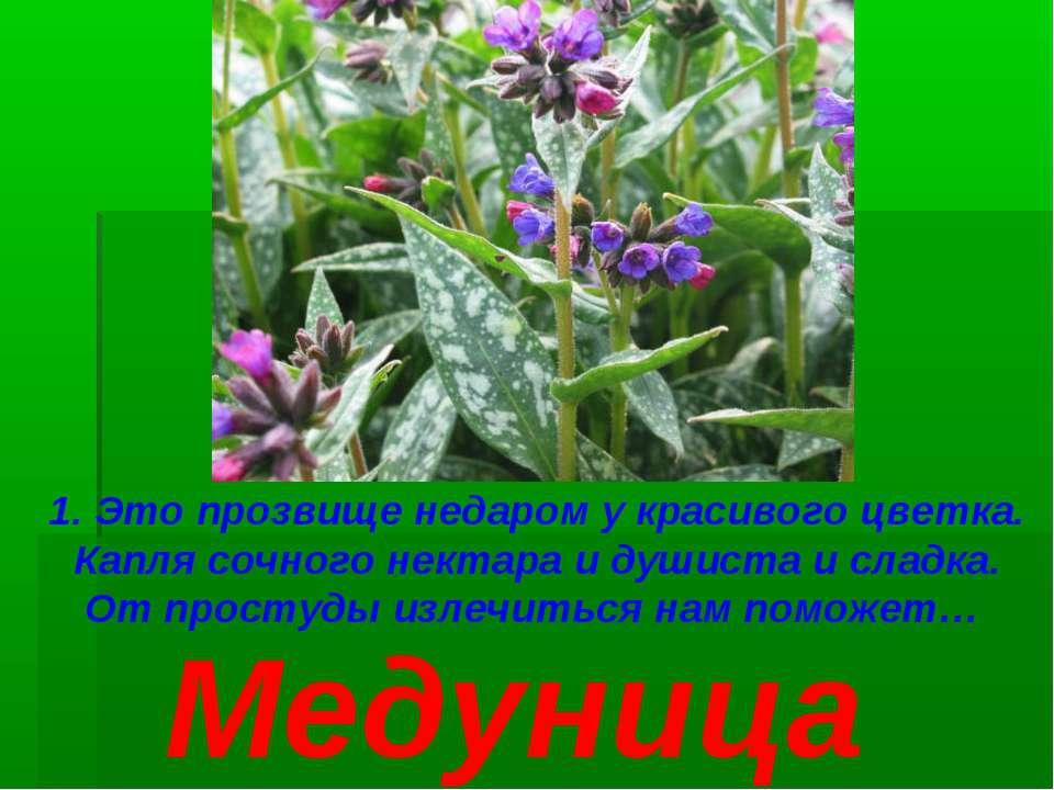 1. Это прозвище недаром у красивого цветка. Капля сочного нектара и душиста и...
