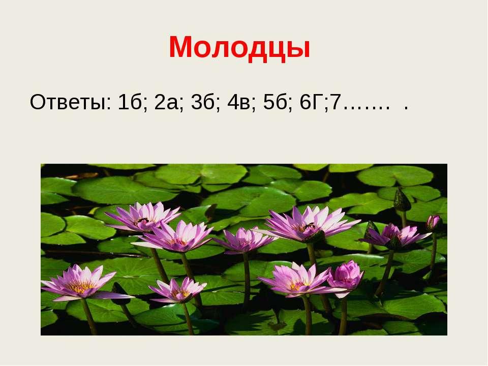 Молодцы Ответы: 1б; 2а; 3б; 4в; 5б; 6Г;7……. .