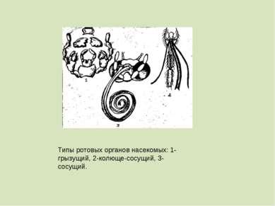 Типы ротовых органов насекомых: 1-грызущий, 2-колюще-сосущий, 3-сосущий.