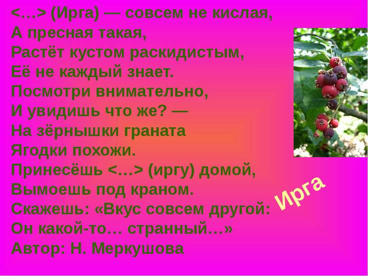 Ирга (Ирга) — совсем не кислая, А пресная такая, Растёт кустом раскидистым, Е...