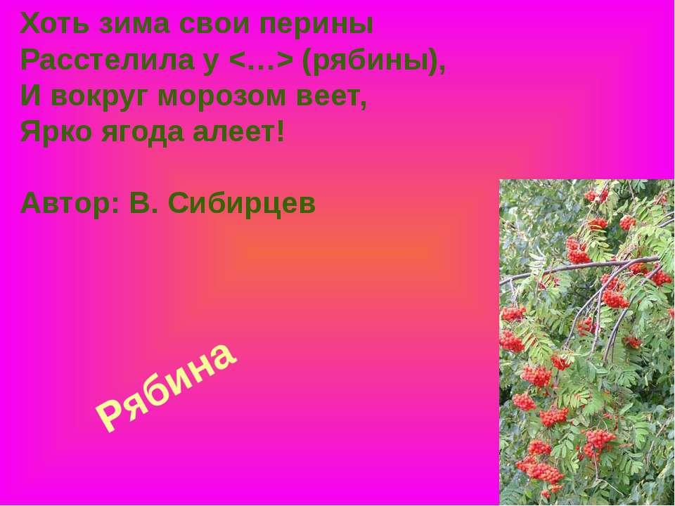 Рябина Хоть зима свои перины Расстелила у (рябины), И вокруг морозом веет, Яр...