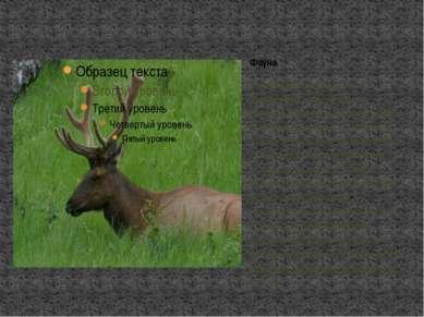 Животный мир Канады очень разнообразен. В тундре обитают северный олень, тунд...