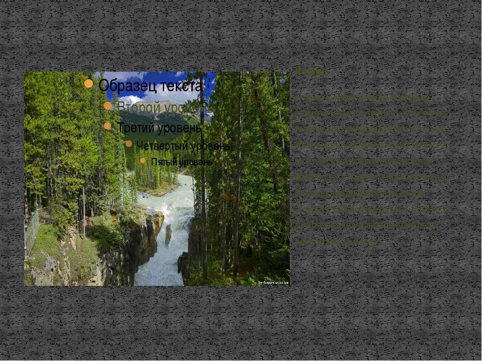 Большую часть земель в Канаде занимает тайга и тундра . Огромную территорию з...