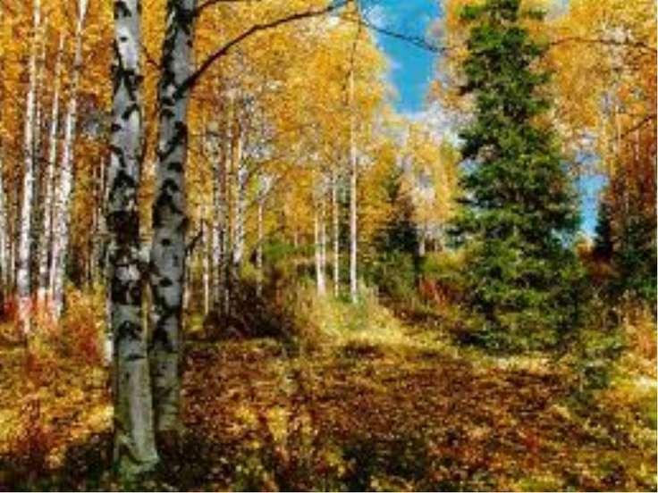«Осенью лиственный лес быстро редел и казался прозрачным. Общий зелёный тон с...