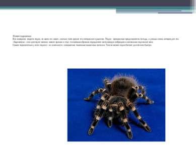 Живая гидравлика Все наверное, видели паука, но мало кто знает, сколько тайн ...