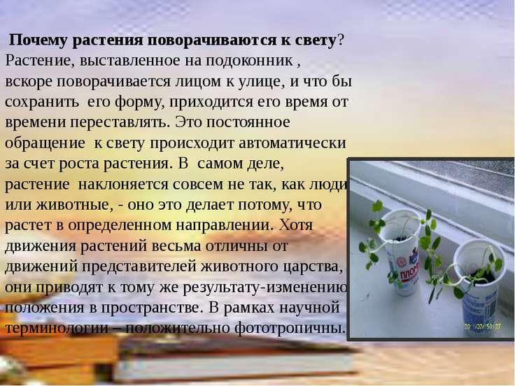 Почему растения поворачиваются к свету? Растение, выставленное на подоконник ...