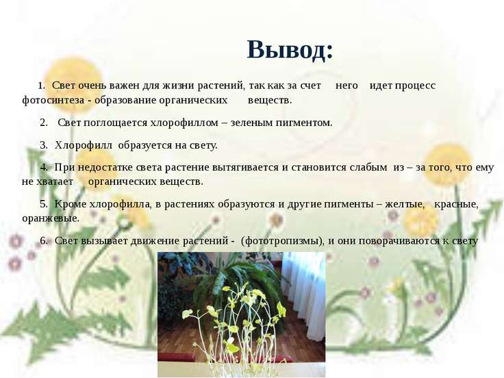 Вывод: 1. Свет очень важен для жизни растений, так как за счет него идет проц...