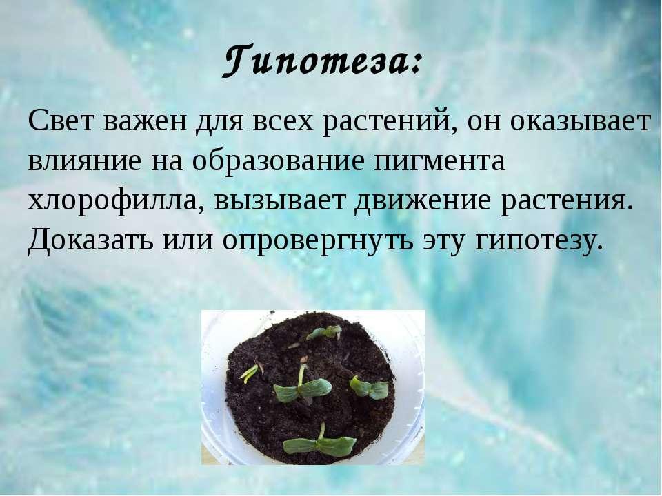Свет важен для всех растений, он оказывает влияние на образование пигмента хл...