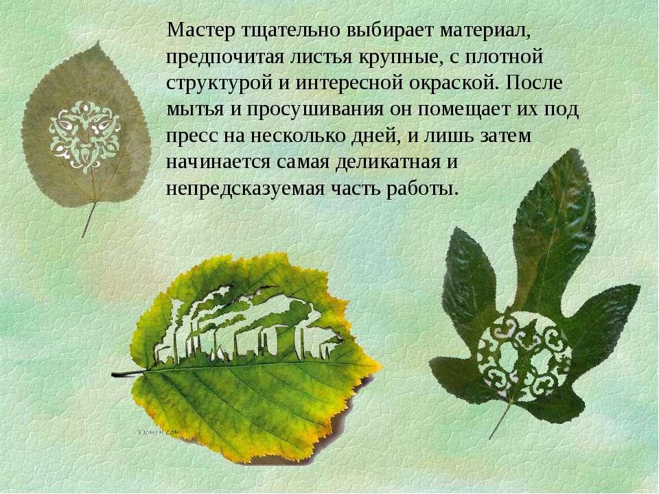 Мастер тщательно выбирает материал, предпочитая листья крупные, с плотной стр...