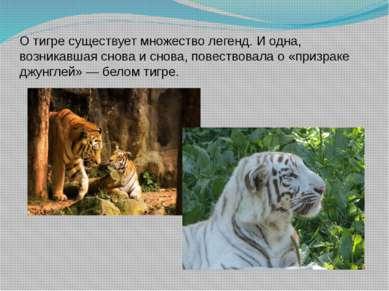 О тигре существует множество легенд. И одна, возникавшая снова и снова, повес...