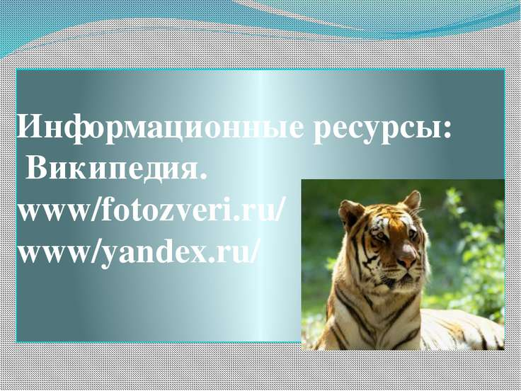 Информационные ресурсы: Википедия. www/fotozveri.ru/ www/yandex.ru/ .
