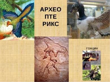 АРХЕО ПТЕ РИКС ГОАЦИН