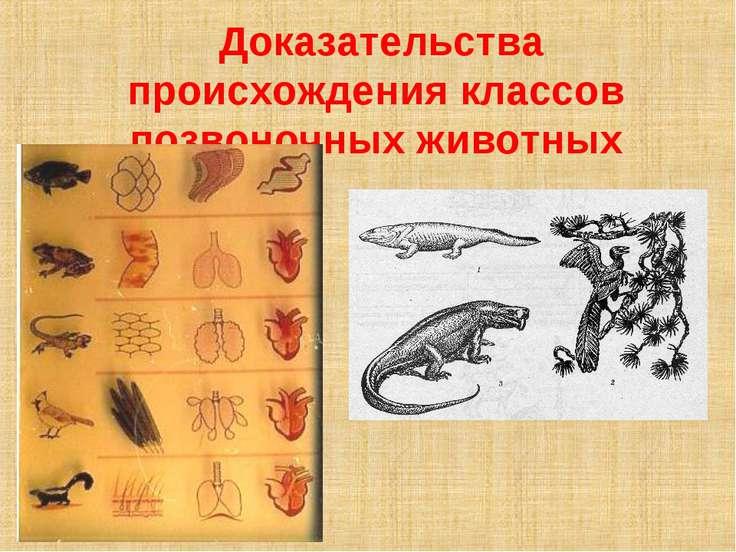Доказательства происхождения классов позвоночных животных