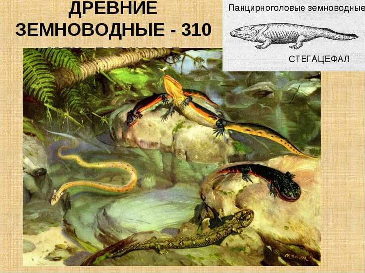 ДРЕВНИЕ ЗЕМНОВОДНЫЕ - 310 млн. лет назад СТЕГАЦЕФАЛ Панцирноголовые земноводные
