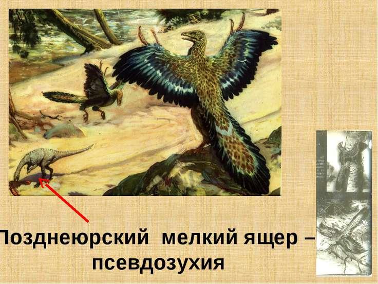 Позднеюрский мелкий ящер – псевдозухия