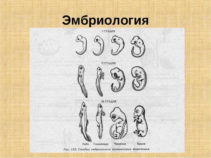Эмбриология