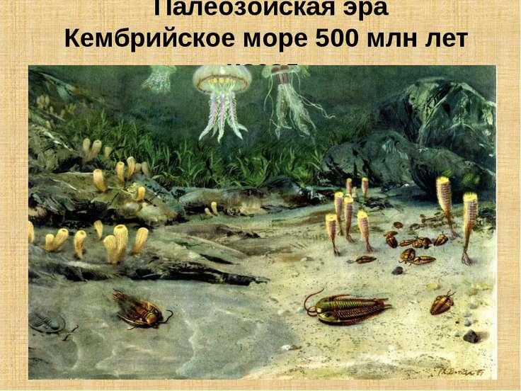 Палеозойская эра Кембрийское море 500 млн лет назад