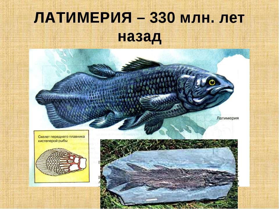 ЛАТИМЕРИЯ – 330 млн. лет назад