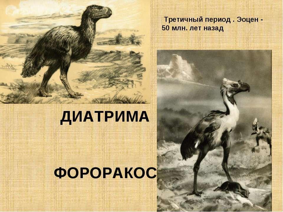 ДИАТРИМА ФОРОРАКОС Третичный период . Эоцен - 50 млн. лет назад