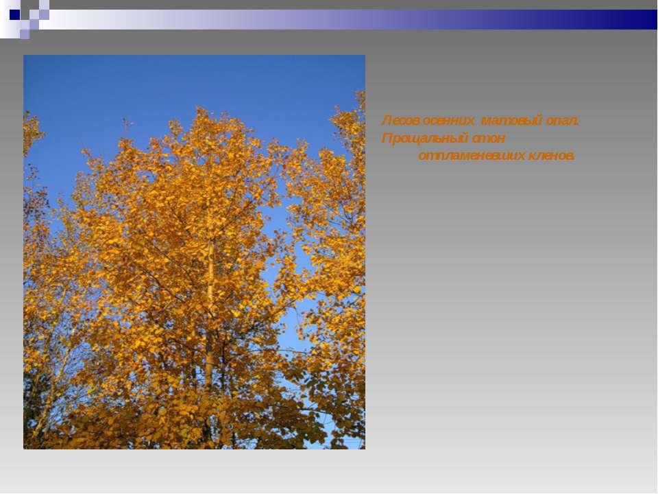 Лесов осенних матовый опал. Прощальный стон отпламеневших кленов.